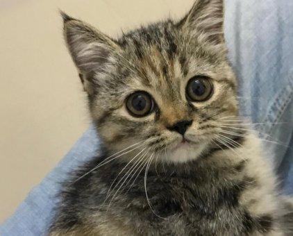 Cần tìm nhà mới cho bé mèo ALN                 tại TP Hồ Chí Minh