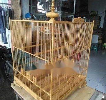 .Cần bán họa mi 1 mùa lồng hót hay liếu lo giá cv                 tại TP Hồ Chí Minh