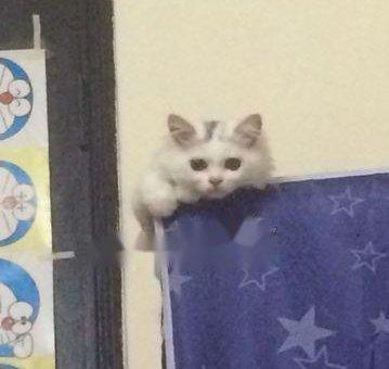 Bán mèo rất nhanh nhẹn và sạch sẽ                 tại Hà Nội