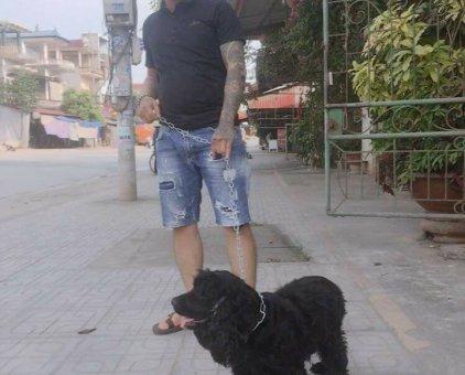 Chó Cuppo                 tại Thái Nguyên