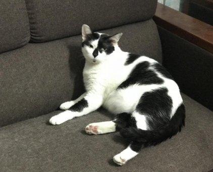 Mèo đáng yêu                 tại TP Hồ Chí Minh