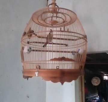 chim đi hội                 tại Đồng Nai