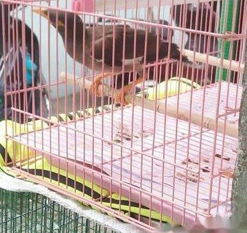 Chim sáo                 tại Đồng Nai
