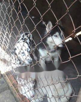 Thanh lý Husky                 tại Bình Dương