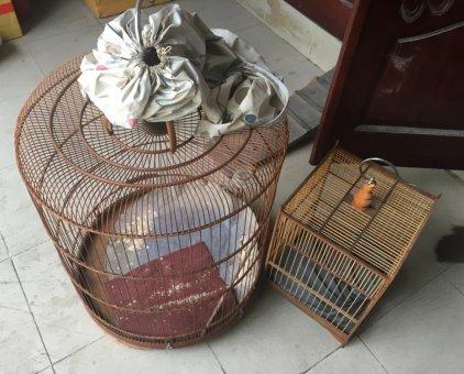 Không nuôi thanh lý hết                 tại TP Hồ Chí Minh