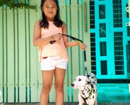 Bán chó đốm cái 6 tháng tuổi                 tại TP Hồ Chí Minh