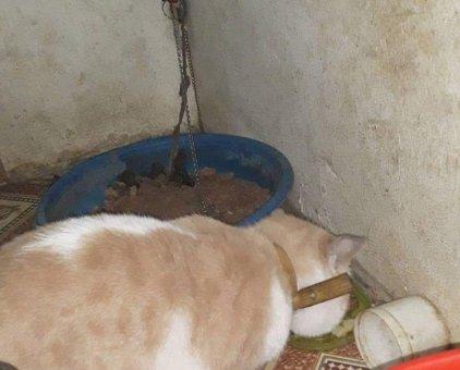Tìm chủ cho mèo cưng                 tại Hà Nội