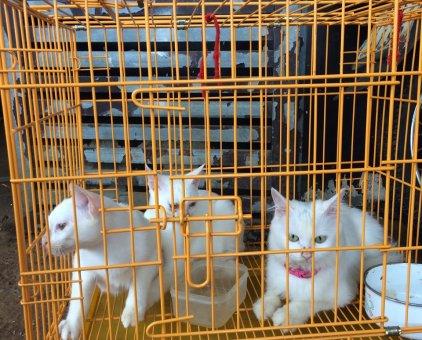 3 mẹ con nhà mèo                 tại TP Hồ Chí Minh