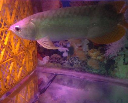 Cá rồng                 tại TP Hồ Chí Minh