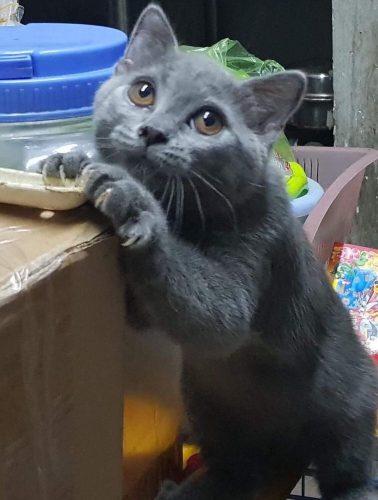 Tìm chủ cho bé mèo cái ALN 3 tháng tuổi tại Hồ Chí Minh