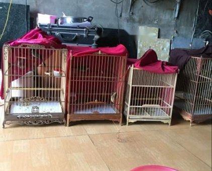 Cần bán bớt chim                 tại Hà Nội