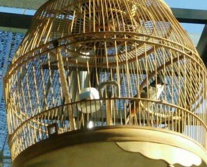 Chim thuộc 2 mùa càfê ok                 tại Đồng Nai