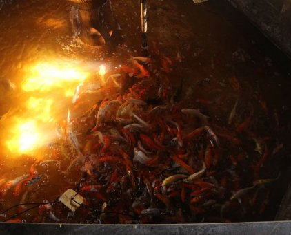 Bán đàn cá koi hơn 200 cá                 tại Hà Nội