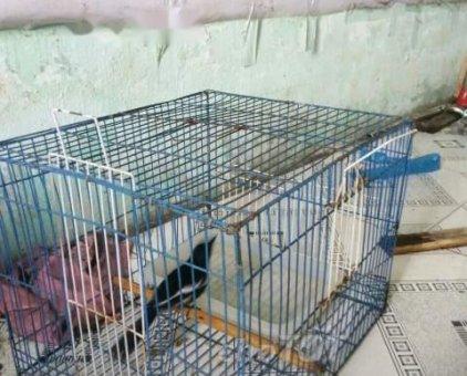 bán chim than chuyền                 tại TP Hồ Chí Minh