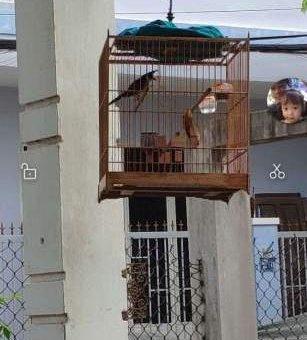 Chim quảng 2 mùa.nam giang                 tại Đà Nẵng