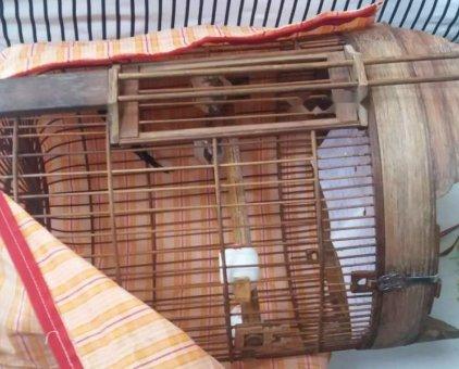 Lòng kiếm đang nuôi choè thân bán hoặc giao lưu                 tại TP Hồ Chí Minh