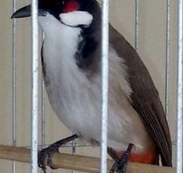 Chim chào màu huế 9                 tại TP Hồ Chí Minh