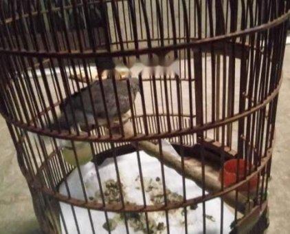 Đôi chim khác                 tại TP Hồ Chí Minh