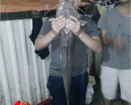 Cá trê                  tại TP Hồ Chí Minh
